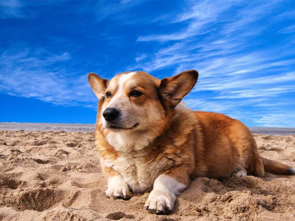 Graceful Departure | Pet Hospice, Euthanasia, & Aftercare